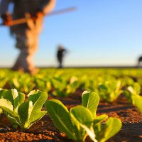 agricultura-giro-rural