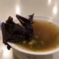 sopa-de-morcego-23012020122108819-jpeg